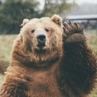 Bearsnomars