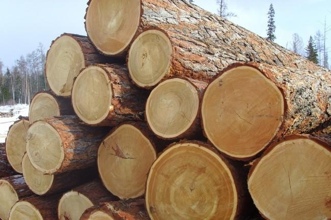 продам базу Email по лесопромышленной тематике 1 - kwork.ru