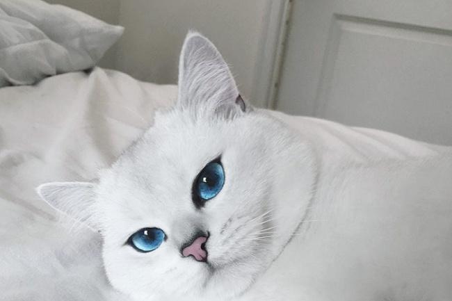 Подберу 20 картинок, фотографий по вашей темеГотовые шаблоны и картинки<br>Поберу из моих источников 20 очень красивых картинок или фотографий по вашей теме. Например: красивые кошки, собаки, природа и другие.<br>
