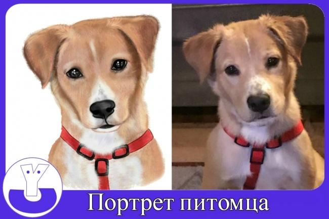 Нарисую портрет питомца 1 - kwork.ru