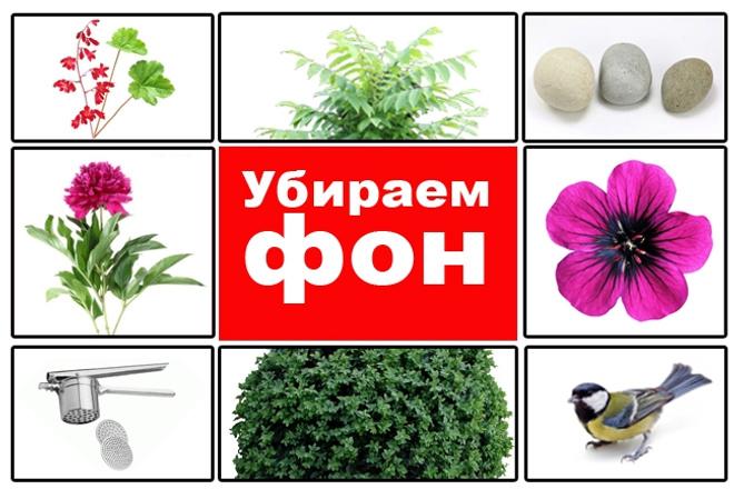 Удалю фон на картинке. Заменю старый фон на белый 1 - kwork.ru