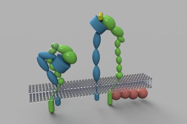 сделаю 3D модель биологической структуры 1 - kwork.ru