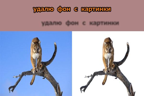 Удалю фон у картинки 1 - kwork.ru