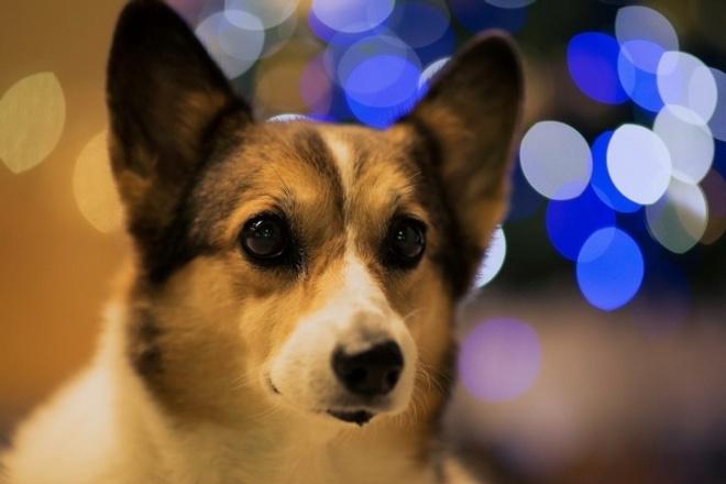 Душевные поздравления всем, кто родился в Год СобакиПоздравления<br>Ты в год Собаки родился! И это - добрый знак. Об этом напишу в стихах. Что точно - не пустяк! Напишу поздравление с Новым Годом, ко Дню рождения, к юбилею для всех, рожденных в Год Собаки. Кроме того, просто персональные поздравления с Новым Годом проникновенно, с юмором, запоминающе.<br>