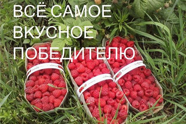 Разыграй-Поздравь друга 1 - kwork.ru