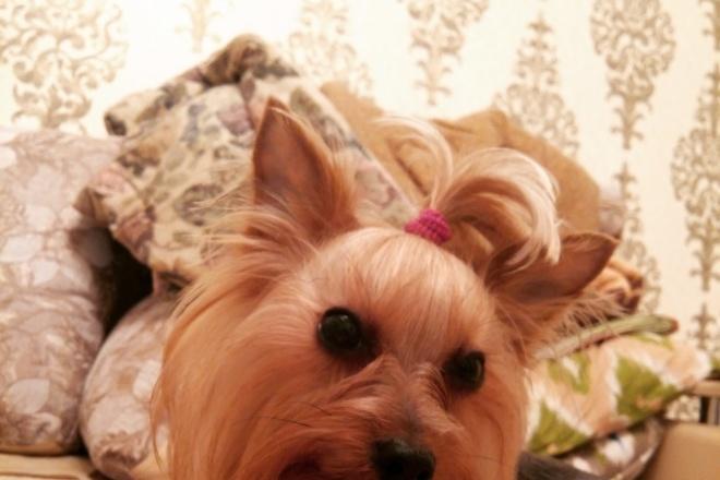Напишу статью о собаках. Уход. Воспитание. Косметика. Грумминг. Питание 1 - kwork.ru