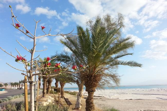 Организую отдых в Израиле максимально комфортно и эффективно 1 - kwork.ru