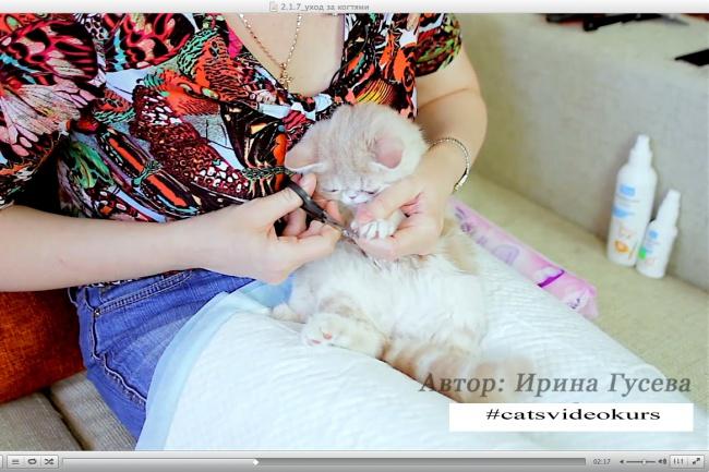 Научу, как правильно ухаживать за котенком и взрослой кошкой 1 - kwork.ru