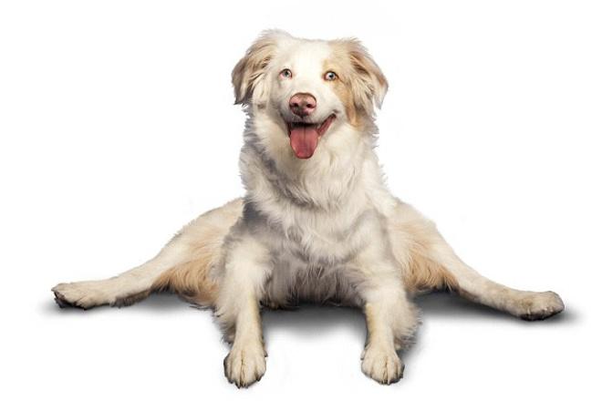 Сделаю календарь на 2016 год с собаками-йогами 1 - kwork.ru