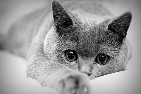 Сделаю черно-белые изображения цветнымиОбработка изображений<br>Сделаю из черно-белого фото или картинки цветное. За 1 кворк 10 шт фото или картинок. Смотрите пример:<br>
