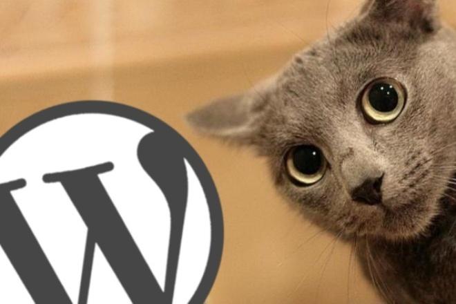 Помогу воплотить ваши идеи на движке Wordpress 1 - kwork.ru