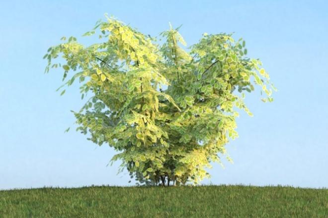 80 высокодеталлизированных 3d моделей деревьев 1 - kwork.ru