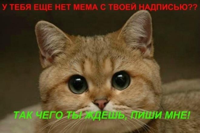 Сделаю мем с Вашей надписью 1 - kwork.ru