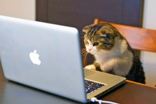 Напишу комментарии на сайтеНаполнение контентом<br>Напишу комментарии до 1000 знаков к товарам/услугам на вашем сайте. Если потребуется, обзор товара, согласно вашим пожеланиям. ТЗ читаю внимательно, с пристрастием).<br>