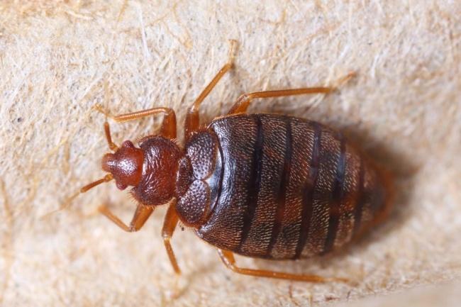 Консультация по борьбе с вредителямиДругое<br>Напишу консультацию по борьбе с вредителями (насекомые, грызуны и прочие) применимо к Вашему случаю.<br>