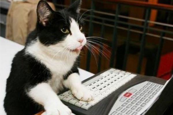 Проверю на уникальность 150 текстов любого объемаСтатьи<br>Занимаетесь наполнением сайтов и регулярно сталкиваетесь с проверкой текстов на уникальность? Не успеваете разобраться с большим количеством статей? Один кворк - и проблема решена! Просто пришлите мне Ваши тексты и укажите, в каких программах их нужно проверить (до 3 на Ваш выбор). Я не только проведу глубокую проверку статей, но и предоставлю вам отчет, в котором будут указаны все характеристики, указываемые Вашей программой (уникальность/вода/заспамленность/рерайт и др.). На выходе вы получите анализ своих текстов и несколько часов сэкономленного времени :)<br>