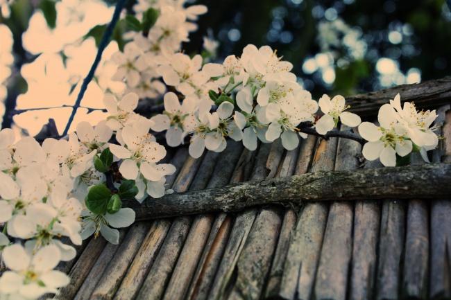 пишу статьи на тему сад и огород 1 - kwork.ru