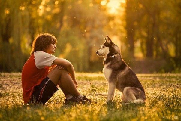 Помогу Вам понять свою собаку и наладить с ней контакт 1 - kwork.ru