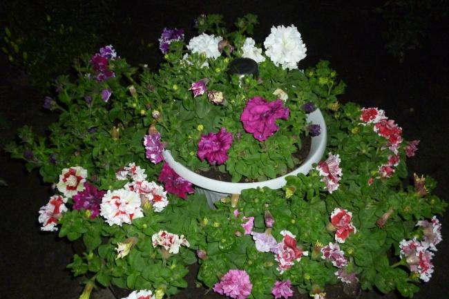 Проведу консультацию по ландшафному и цветочному дизайну 1 - kwork.ru