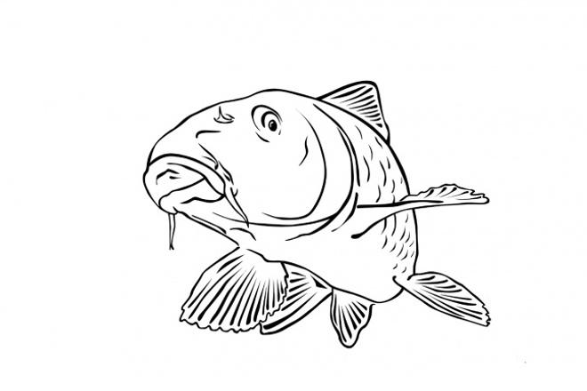 Напишу статью или обзор на рыболовную тематику 1 - kwork.ru