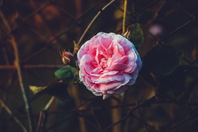 обработаю фото в Lightroom/Photoshop 1 - kwork.ru
