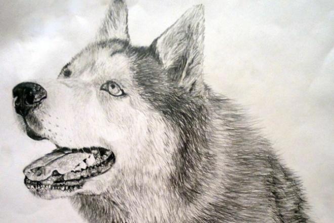 Нарисую графический портрет вашего питомца 1 - kwork.ru