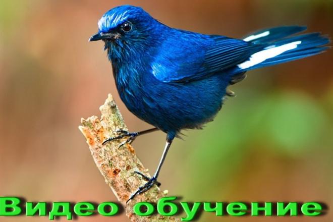 Удалю фон с ваших фотографий 1 - kwork.ru