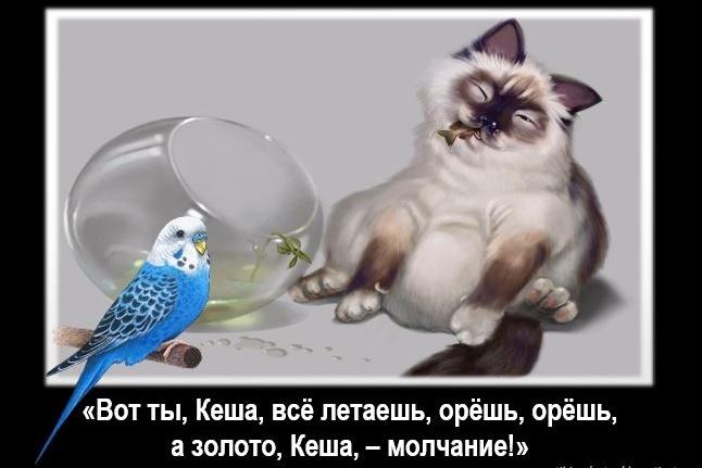 Пять авторских демотиваторов или мотиваторов к Вашей статье 1 - kwork.ru
