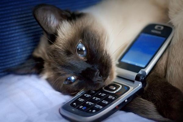 Позвоню вам 1 - kwork.ru