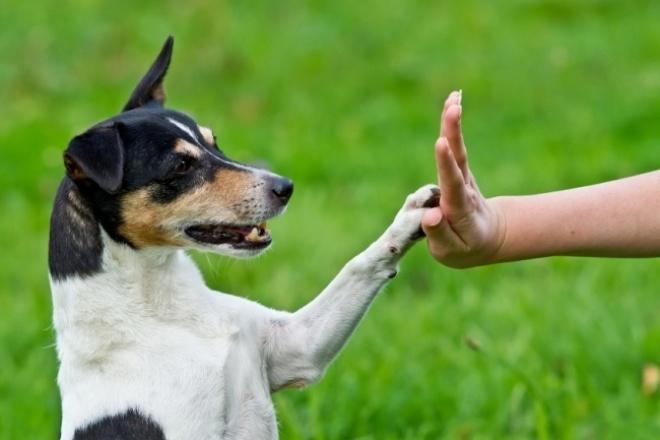 Есть готовая статья по теме о воспитании собаки 1 - kwork.ru