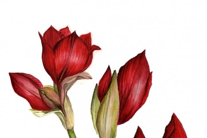Рисую по фото, могу в другом стилеИллюстрации и рисунки<br>Работы выполнены акварелью, обработаны в фотошопе. в зависимости от ваших предпочтений подберу другой стиль, цвета.<br>