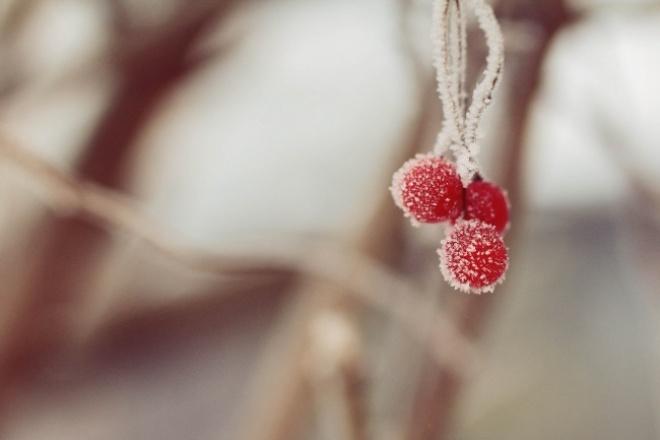 Сниму оригинальные фото для ваших проектов, природа, предметы, другое 1 - kwork.ru