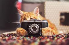 Оценю Ваше фото, стихотворение, идею, видео, наряд, сайт 16 - kwork.ru