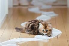 Научу, как правильно ухаживать за котенком и взрослой кошкой 4 - kwork.ru