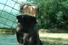 Домашние животные 11 - kwork.ru