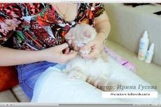 Научу вас мыть кошек 5 - kwork.ru