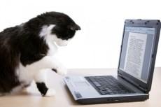 помогу в написании рефератов и докладов 5 - kwork.ru