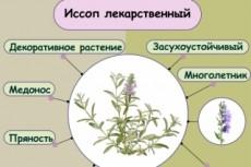 Иллюстрация в классическом стиле 27 - kwork.ru