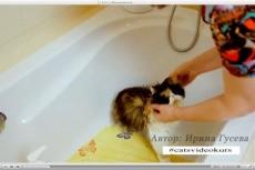 Научу, как правильно ухаживать за котенком и взрослой кошкой 3 - kwork.ru