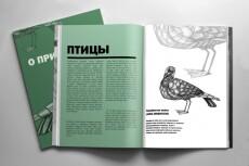 Сделаю Эскиз для Инфографики 24 - kwork.ru