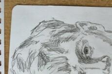 Нарисую иллюстрацию, портрет, скетч 19 - kwork.ru