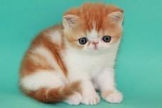 Научу, как правильно ухаживать за котенком и взрослой кошкой 5 - kwork.ru