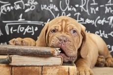Дисциплинарная дрессировка собак 3 - kwork.ru