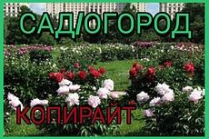 Продам статью. Однолетние цветы для сада 3 - kwork.ru