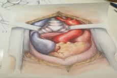 Нарисую иллюстрацию карандашом 18 - kwork.ru